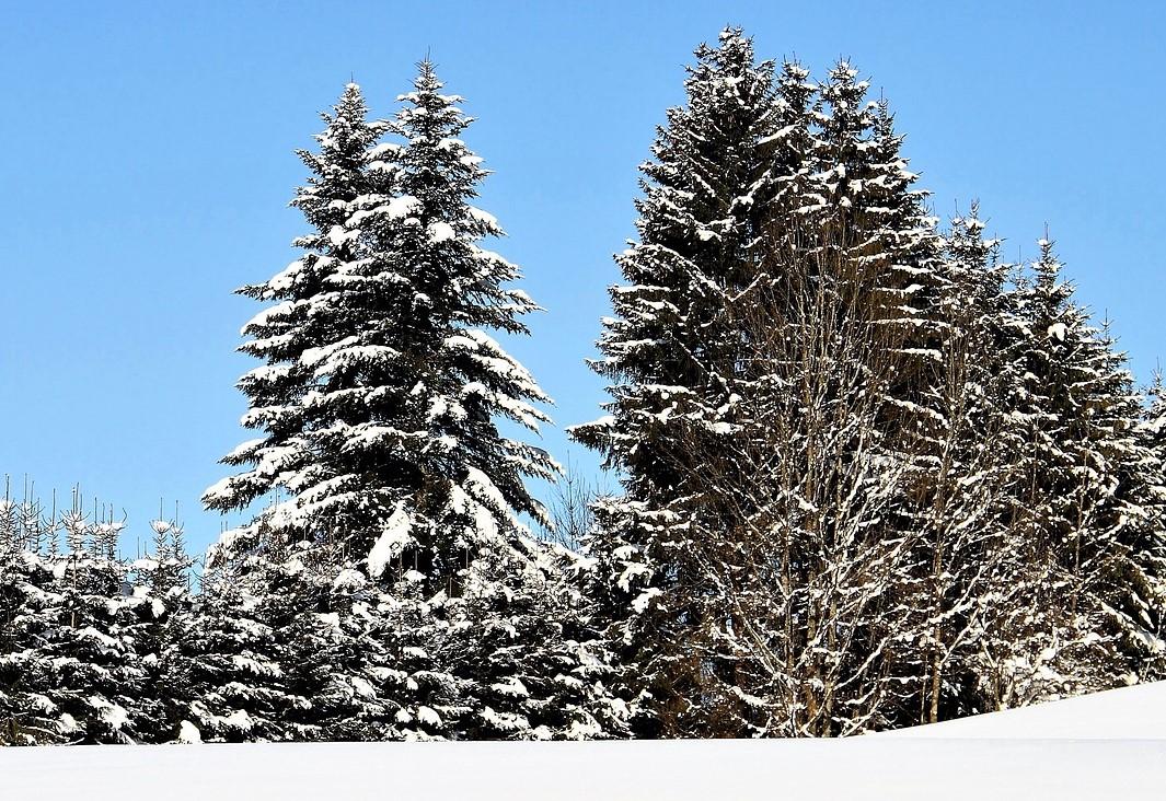 Delancey Street Christmas Trees